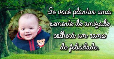 Se você plantar uma semente de amizade colherá um ramo de felicidade