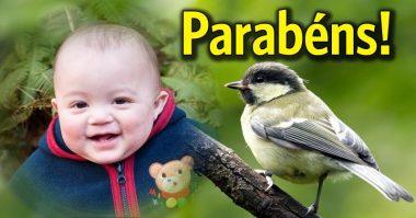 Parabéns com pássaro